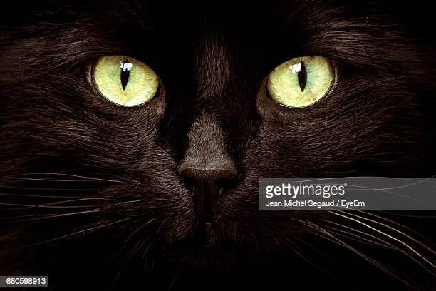 close-up portrait of black cat with green eyes - gatto nero foto e immagini stock