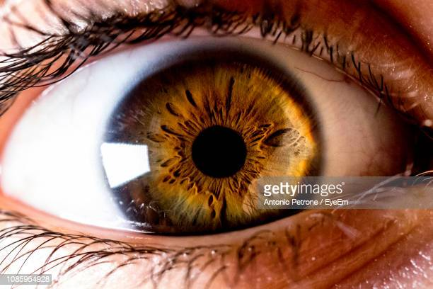 close-up portrait of brown human eye - light brown eyes stock photos and pictures