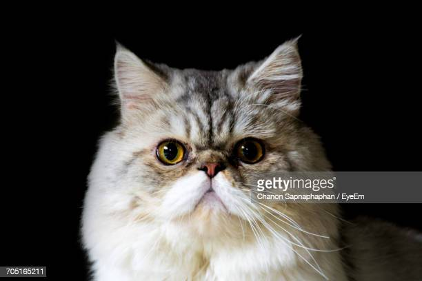Hairy Pussy Stock Photos And Pictures  Getty Images-3485