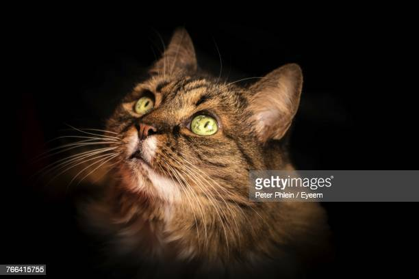 Close-Up Portrait Of Cat Against Black Background
