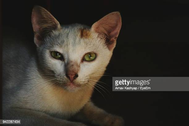close-up portrait of cat against black background - black siamese cat stock pictures, royalty-free photos & images