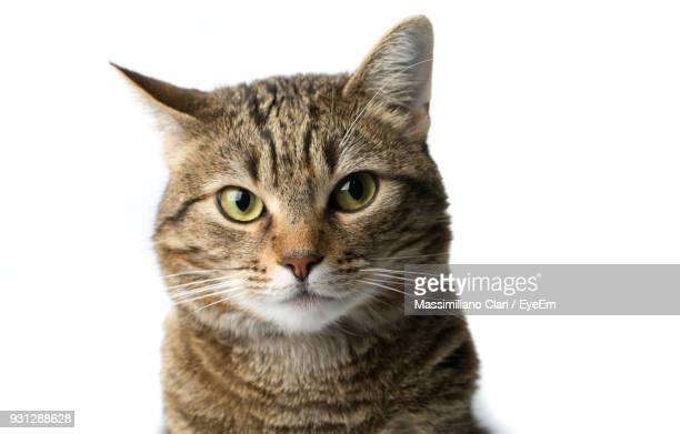 close-up portrait of cat against white background - animal head stock pictures, royalty-free photos & images