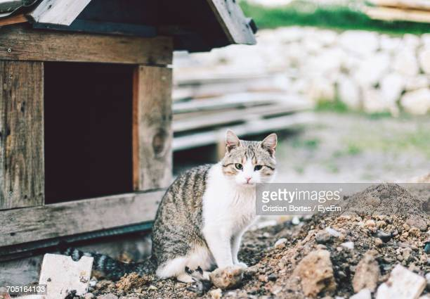 close-up portrait of cat at field - bortes stockfoto's en -beelden