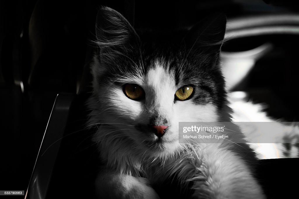 Close-Up Portrait Of Cat At Home : Foto stock