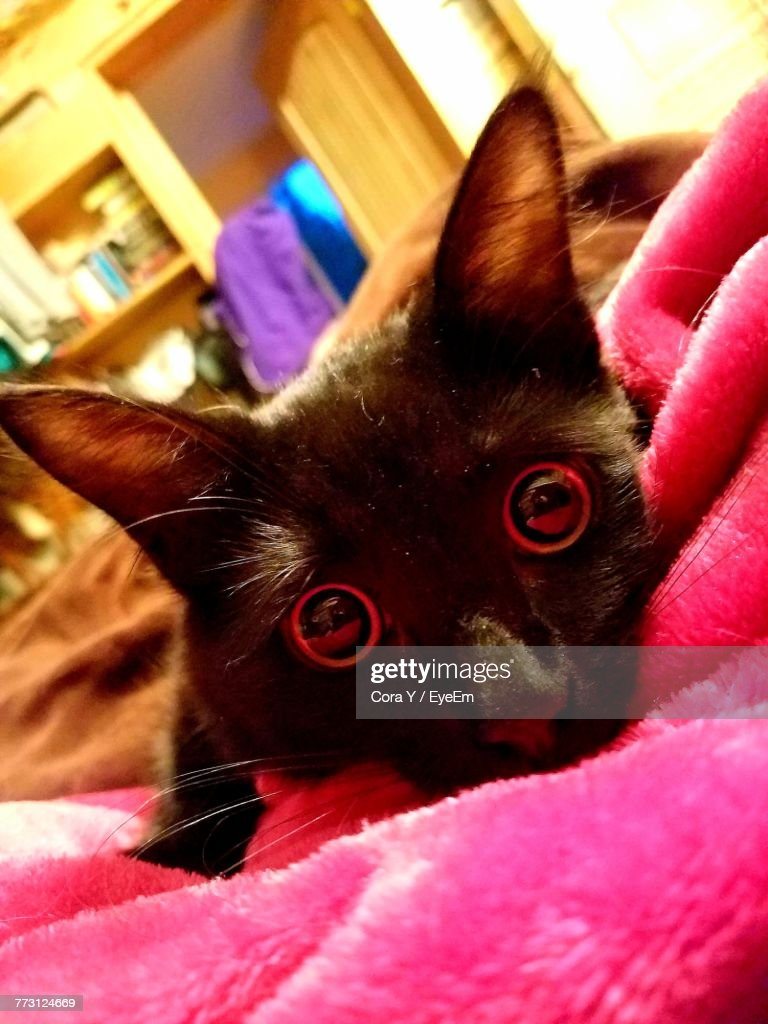 Close-Up Portrait Of Cat At Home : Photo