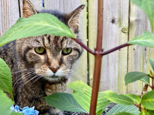 Close-up portrait of cat by plants,Pittsburgh,Pennsylvania,United States,USA