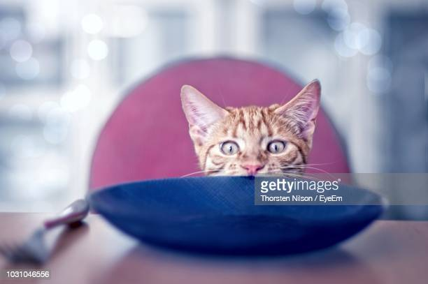 Close-Up Portrait Of Cat By Plate