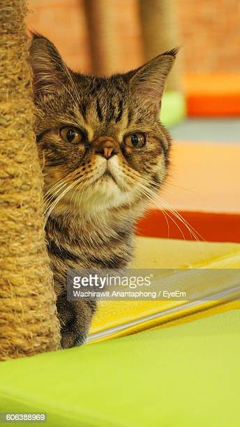 Close-Up Portrait Of Cat By Scratching Post