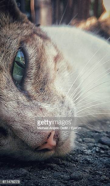 Close-Up Portrait Of Cat Lying Outdoors