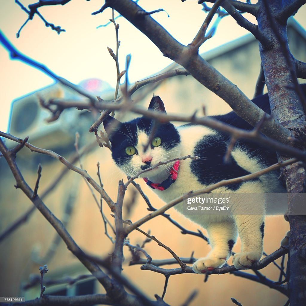 Close-Up Portrait Of Cat On Bare Tree Against Sky : Photo