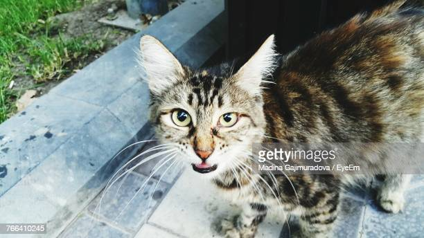 close-up portrait of cat on footpath - {{relatedsearchurl('london eye')}} stock photos and pictures