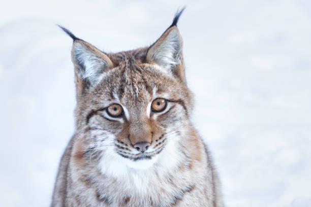 Close-up portrait of cat on snow