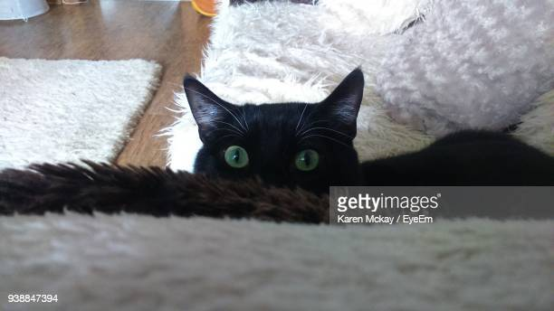 close-up portrait of cat on sofa at home - karen mckay stock pictures, royalty-free photos & images