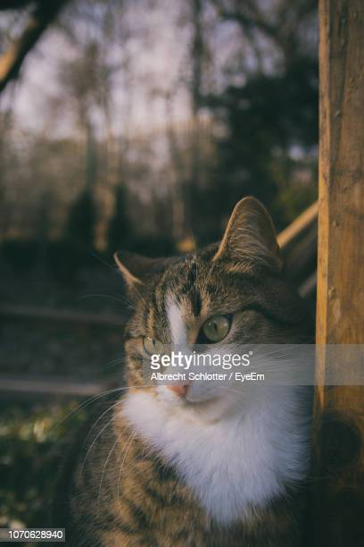 close-up portrait of cat on tree - albrecht schlotter stock pictures, royalty-free photos & images
