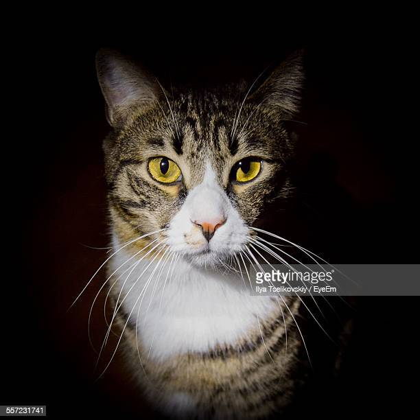 Close-Up Portrait Of Cat Over Black Background