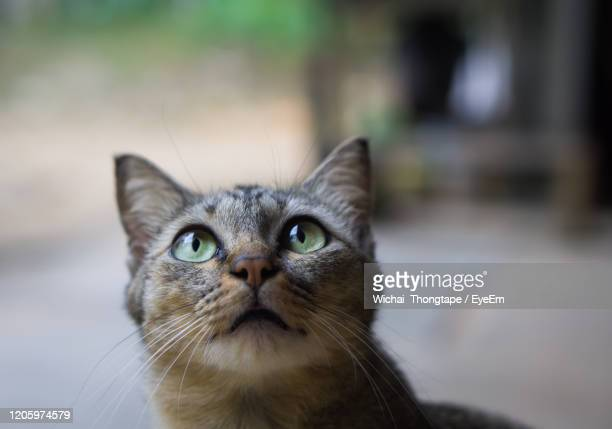 close-up portrait of cat - paw stock pictures, royalty-free photos & images