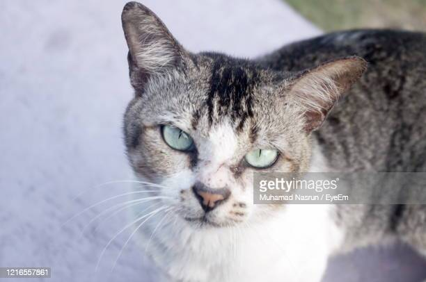 close-up portrait of cat - muhamad nasrun stock pictures, royalty-free photos & images