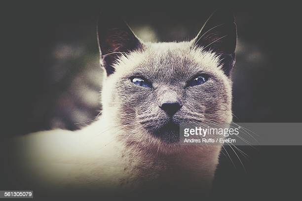 close-up portrait of cat - andres ruffo stock-fotos und bilder