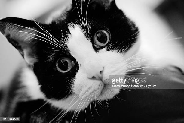 close-up portrait of cat - massimiliano ranauro stock pictures, royalty-free photos & images