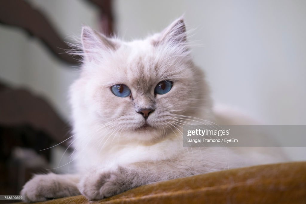 Close-Up Portrait Of Cat : Stock Photo
