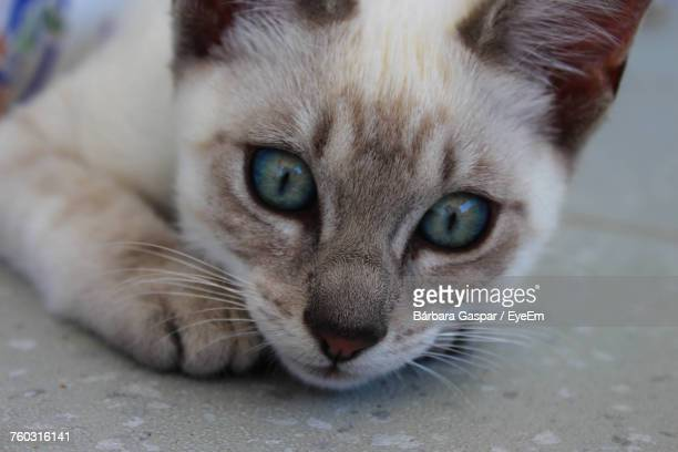 close-up portrait of cat - leiria district stock photos and pictures