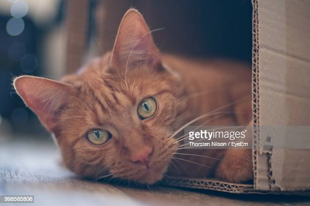 Close-Up Portrait Of Cat Relaxing In Cardboard Box