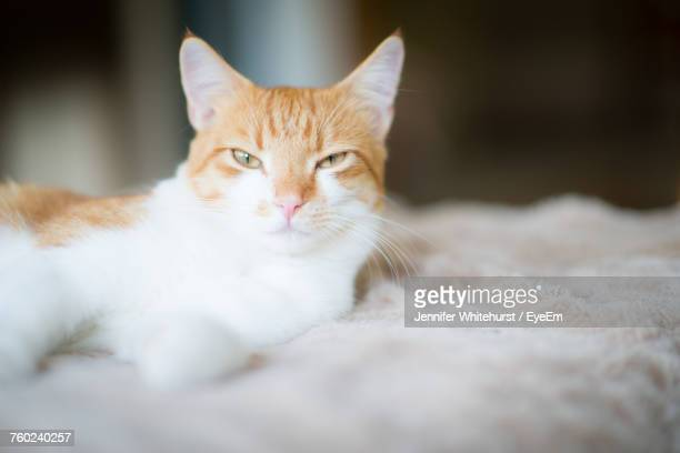 Close-Up Portrait Of Cat Relaxing On Bed
