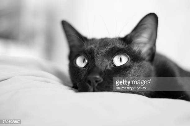 Close-Up Portrait Of Cat Relaxing