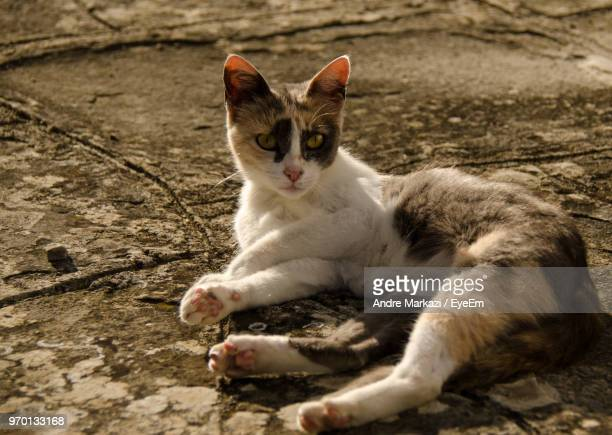 Close-Up Portrait Of Cat Resting On Footpath