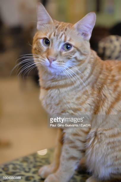 close-up portrait of cat sitting on bed - pawed mammal stock pictures, royalty-free photos & images