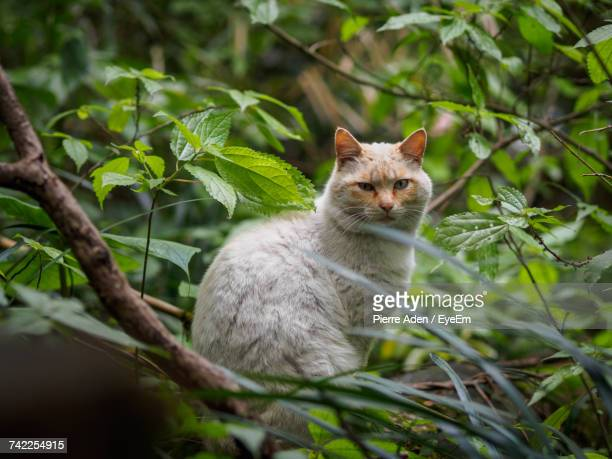 Close-Up Portrait Of Cat Sitting On Tree Trunk