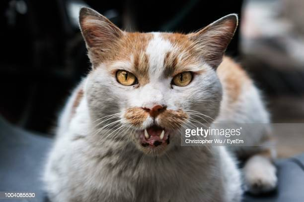 close-up portrait of cat sitting outdoors - pawed mammal stock pictures, royalty-free photos & images