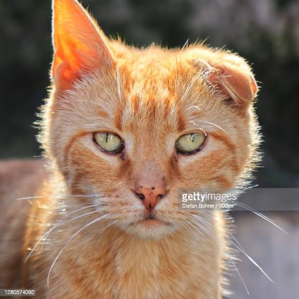 close-up portrait of cat,bayern,germany - bayern stock pictures, royalty-free photos & images