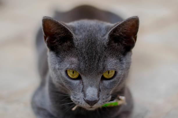 Close-up portrait of cat,Ciutadella de Menorca,Illes Balears,Spain