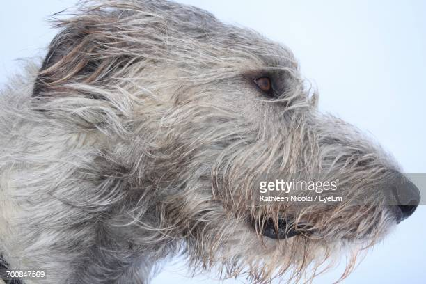 Close-Up Portrait Of Dog Against Sky