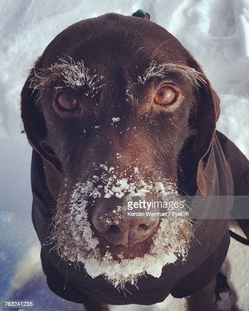 Close-Up Portrait Of Dog During Winter