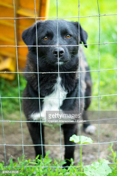 Close-Up Portrait Of Dog In Cage