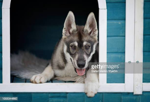 Close-Up Portrait Of Dog Looking Through Window