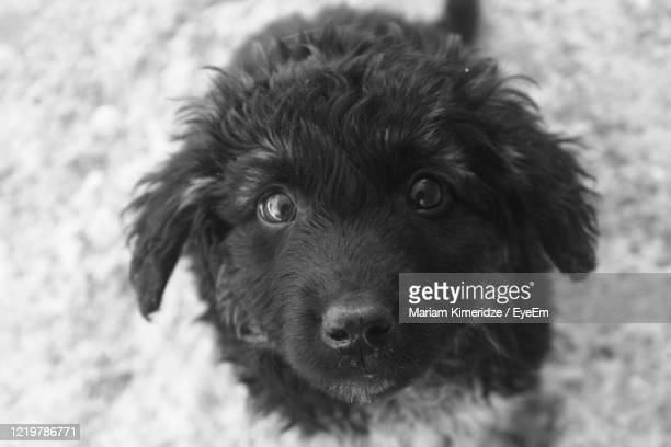 close-up portrait of dog - black and white instant print stock pictures, royalty-free photos & images