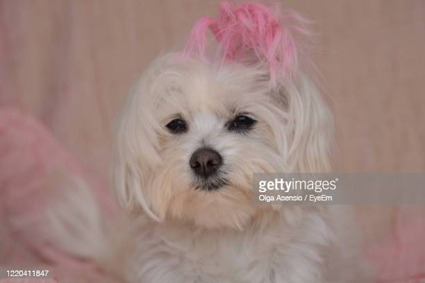 close-up portrait of dog - millennial pink stock pictures, royalty-free photos & images