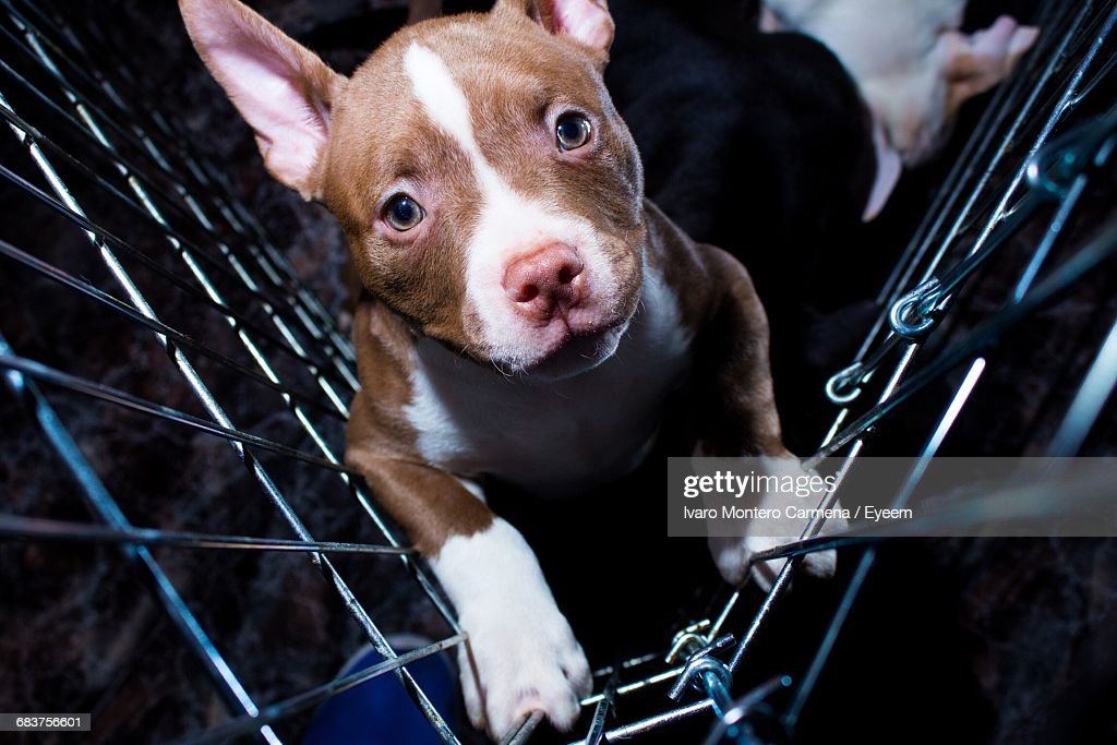 Close-Up Portrait Of Dog : Stock Photo