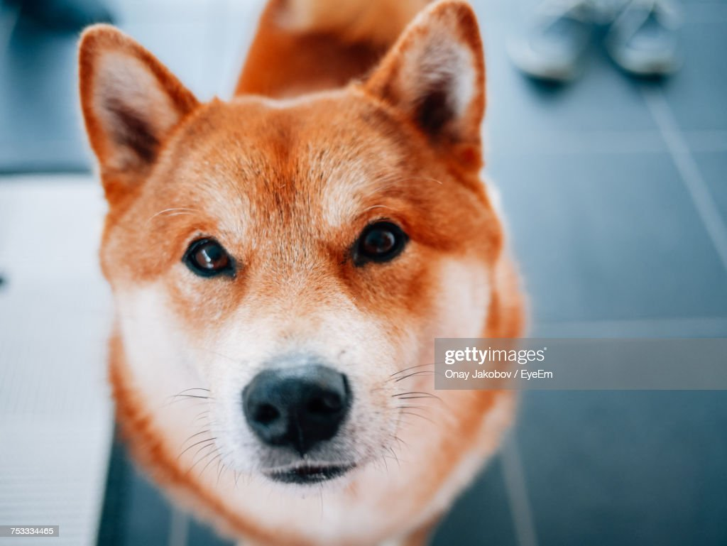 Close-Up Portrait Of Dog : Stock-Foto