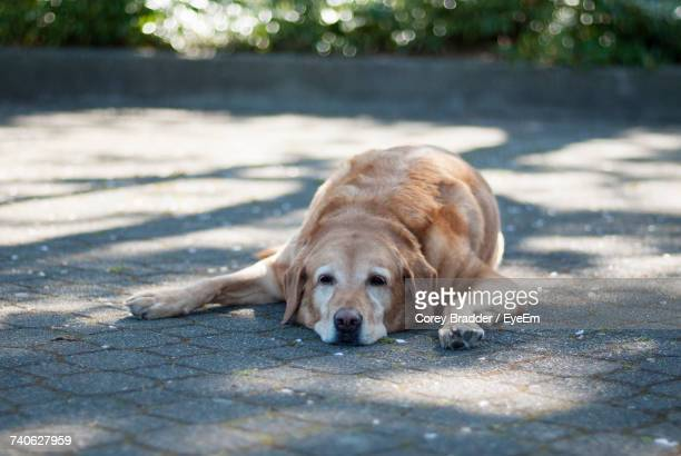 Close-Up Portrait Of Dog Relaxing Outdoors