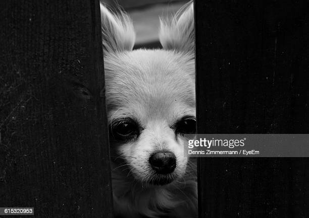 Close-Up Portrait Of Dog Seen Through Ajar Door