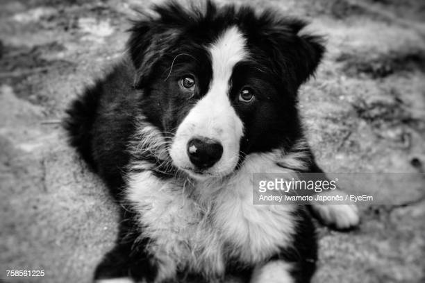 close-up portrait of dog sitting outdoors - japonês stock pictures, royalty-free photos & images