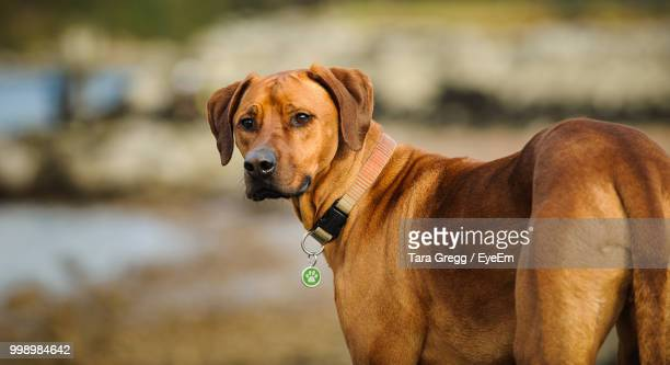 close-up portrait of dog standing outdoors - {{relatedsearchurl('london eye')}} stock photos and pictures