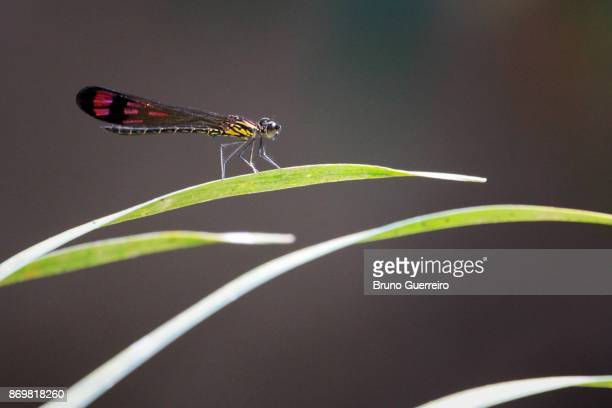 Close-up portrait of dragon fly perching on leaf