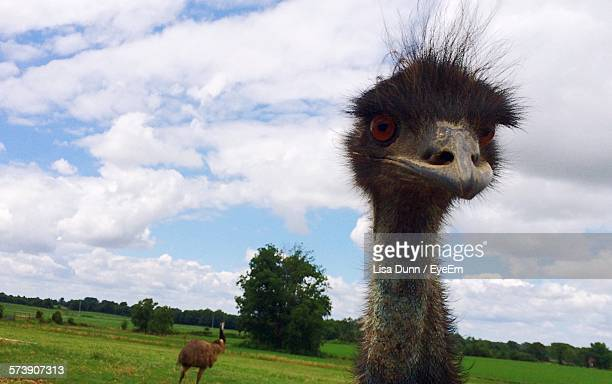 Close-Up Portrait Of Emu On Field Against Cloudy Sky