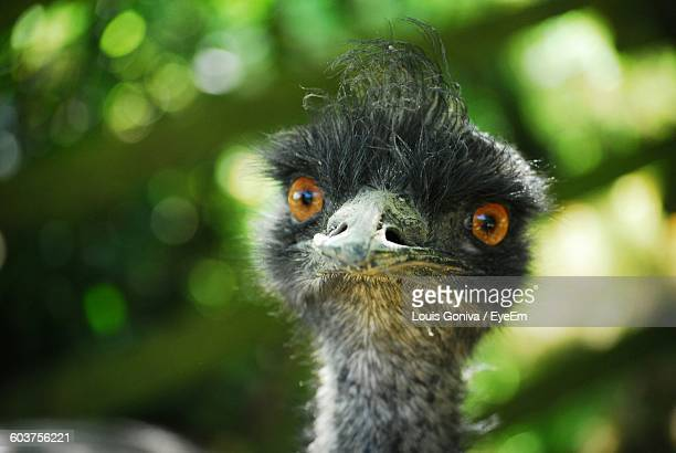 Close-Up Portrait Of Emu