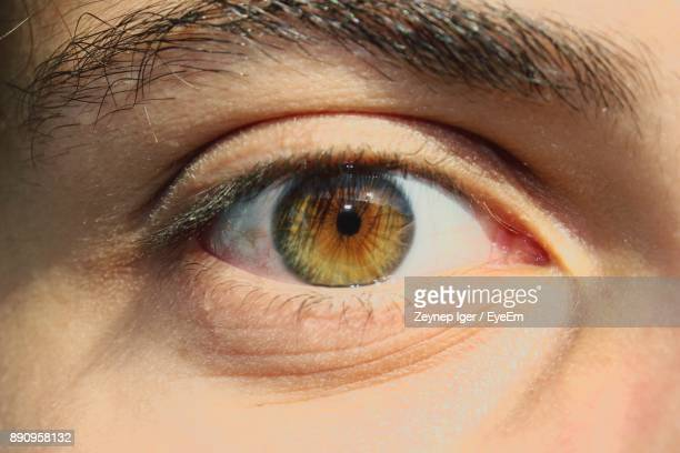 close-up portrait of eye - hazel eyes stock pictures, royalty-free photos & images